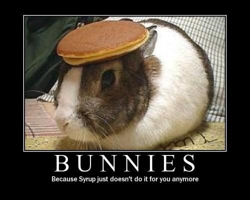 bunnies cute pancakes funny - 7483177216