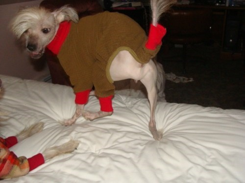 dogs bad hair decisions dog costumes funny - 7483189504