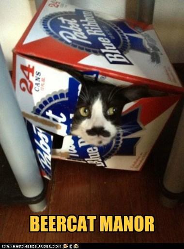 beer alcohol pun meerkat funny - 7483877888