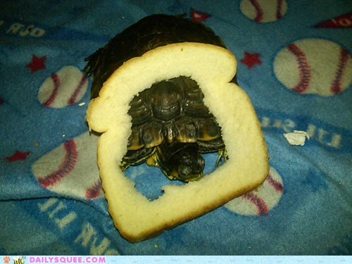 cat breading turtle funny