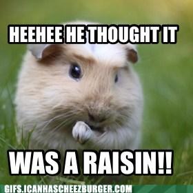 poop guinea pig funny - 7484686592