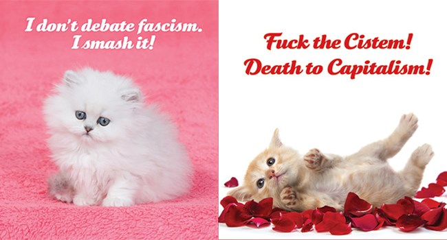 social justice kitty calendar for 2019 social justice