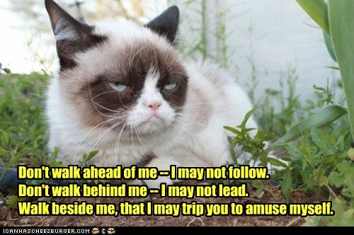 Grumpy Cat quote funny fall - 7485541120