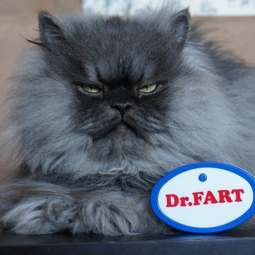 wtf dr colonel meow funny fart - 7485716736