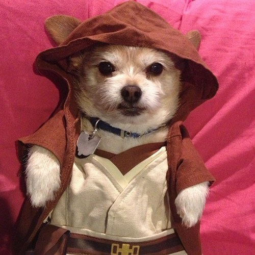 Jedi Dog Dressed in Build a Bear Clothes