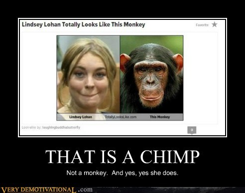 chimp monkey funny lindsey lohan - 7485852416