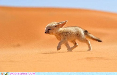 Fennec fox bracing the wind