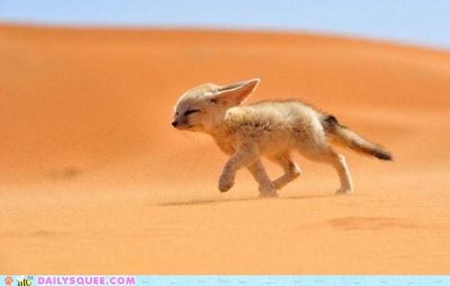wind fox - 7485882368