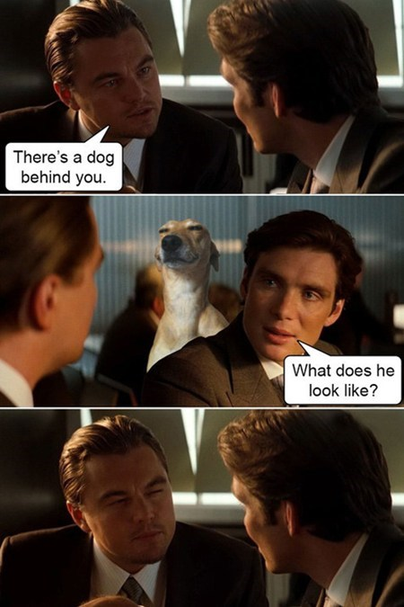 dogs leonardo dicaprio Inception squinting funny - 7485934080