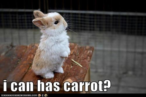 i can has carrot?