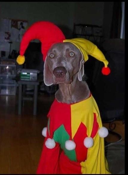 dog costumes funny - 7486182656