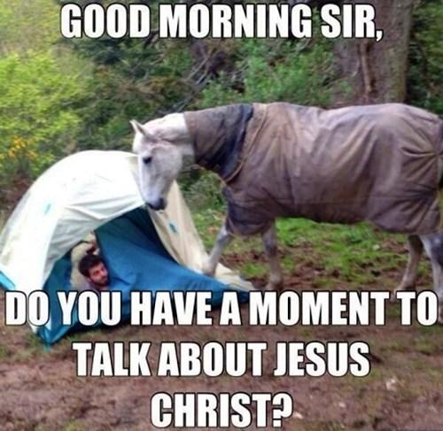 wtf outside horses animals funny - 7486216960
