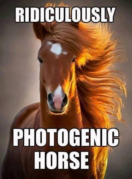 Memes,ridiculously photogenic,horses,funny