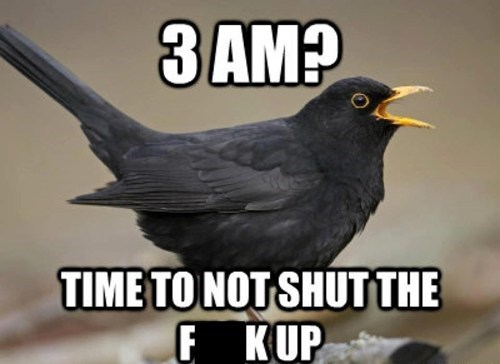 morning bird funny
