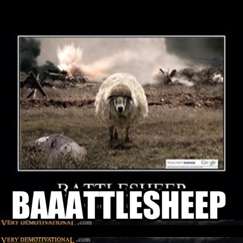 battleship,sheep,funny