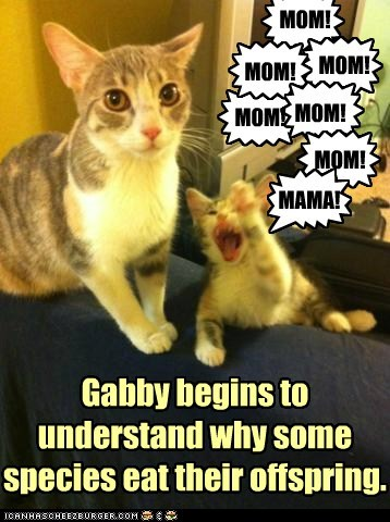 kitty,mom,funny