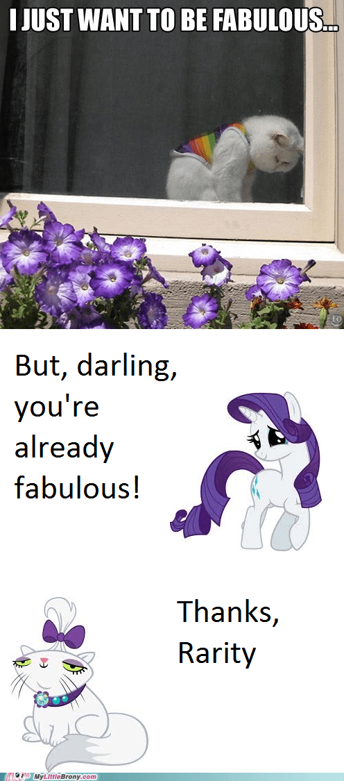 rarity Cats funny animals - 7489528576