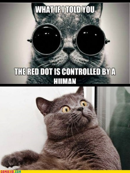 red dot what if i told you morpheus kitty funny - 7490134016