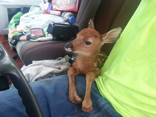 ride,baby,deer