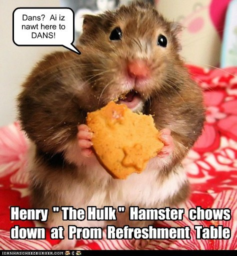 "Henry "" The Hulk "" Hamster chows down at Prom Refreshment Table Dans? Ai iz nawt here to DANS!"