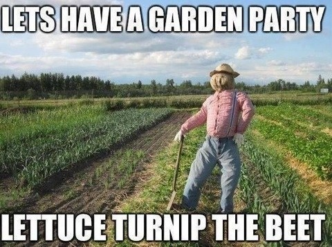 vegetables puns Party funny - 7490307328
