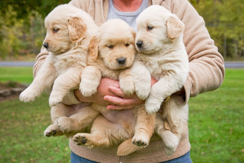 spa puppies resort cuddling vacation - 7490309