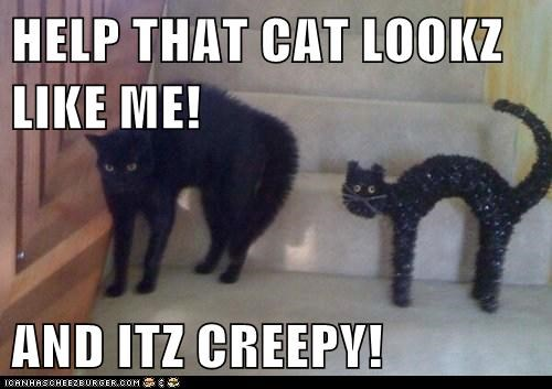 HELP THAT CAT LOOKZ LIKE ME!  AND ITZ CREEPY!