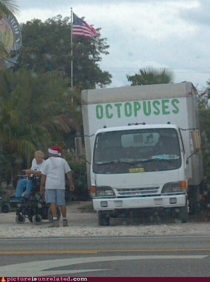 wtf,bad idea,octopus,truck,funny