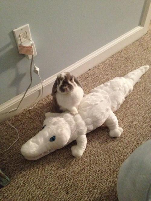 crocodile,bunny