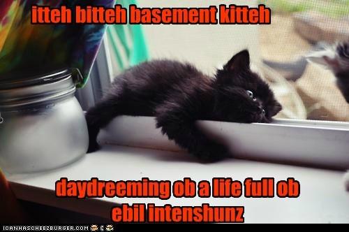 itteh bitteh basement kitteh