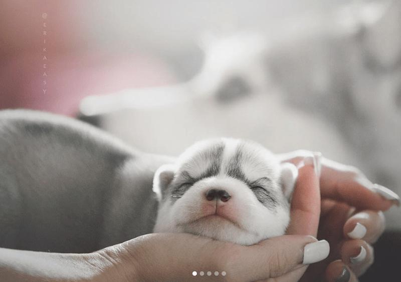 russia instagram husky dog photos - 7490565