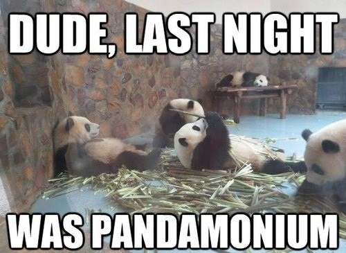 bamboo,puns,panda,funny