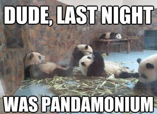 bamboo puns panda funny - 7490574592