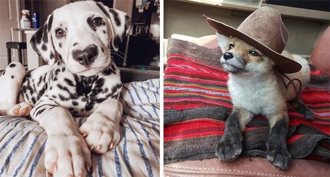 gifs cuteness cute animals cuteness overload - 7490821