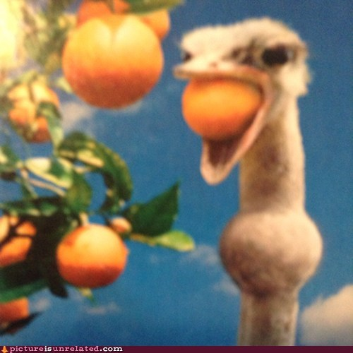 choking funny ostrich - 7492087296