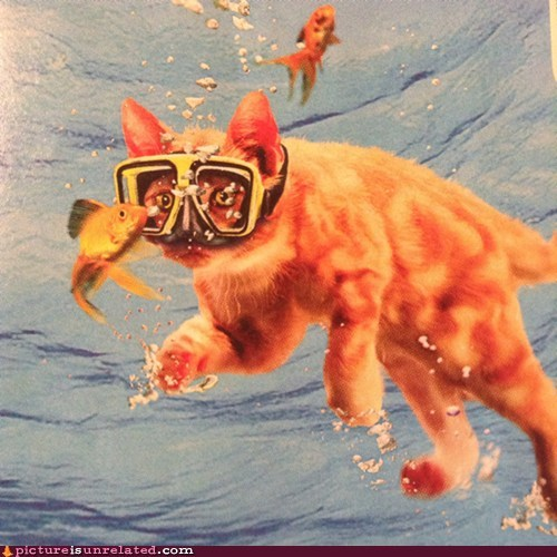 wtf,swimming,Cats,funny