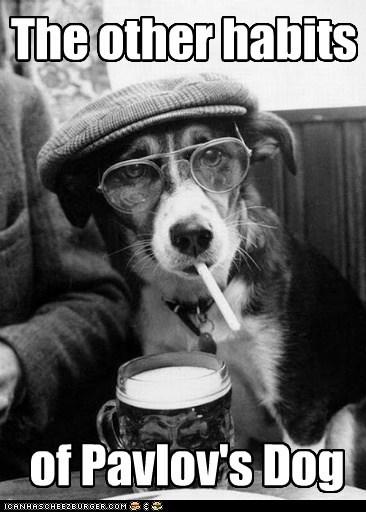 The other habits of Pavlov's Dog