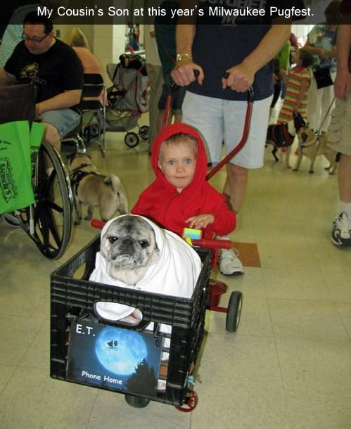 costume,pug,ET,pugfest,funny