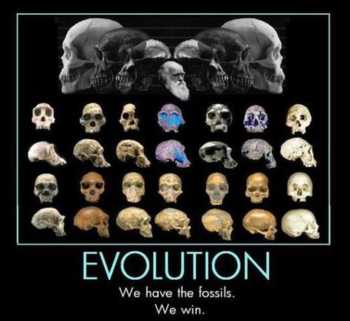 evolution science fossils funny win - 7494530816