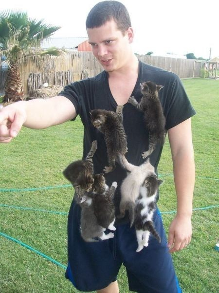 peta kitten funny poorly dressed g rated - 7494676992