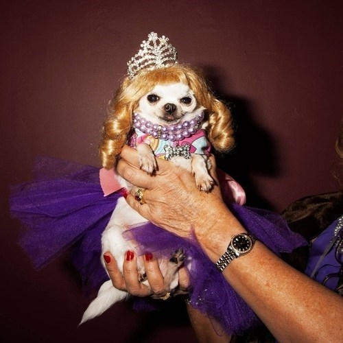 dogs funny princess dog princesses - 7494712576