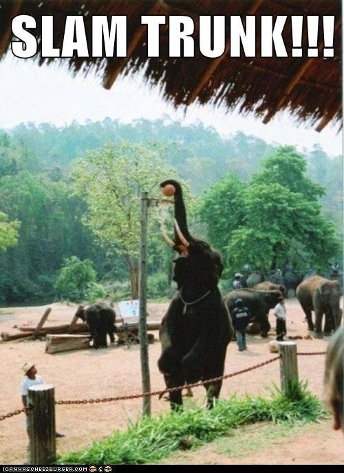 pun elephant slam dunk funny - 7495580928