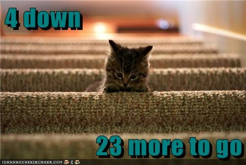 stairs,kitty,funny