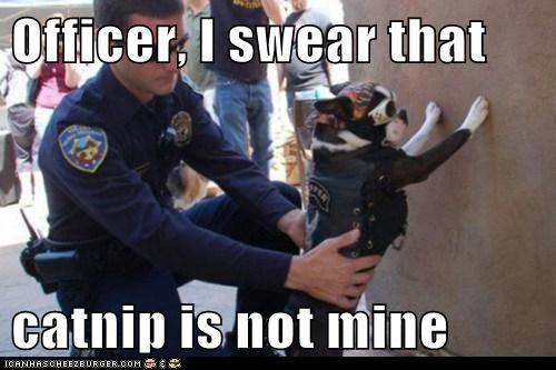 costume catnip funny police - 7497359616