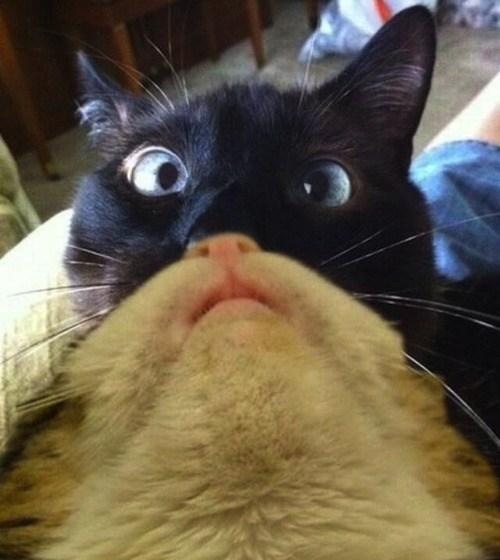 A Cat Catbeard
