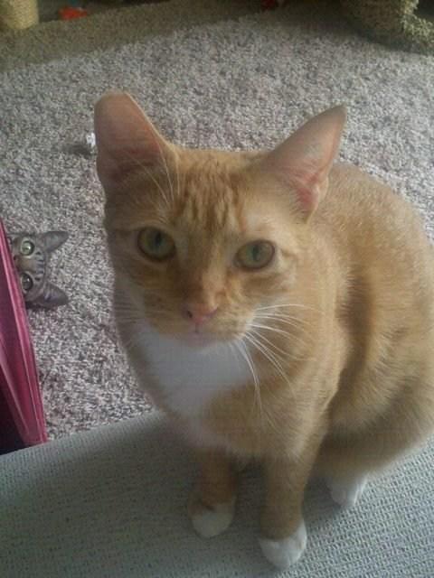 photobomb Cats funny - 7497671936