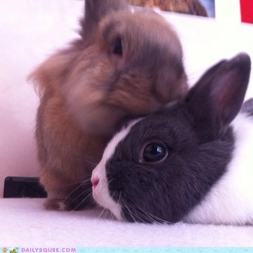 bunnies,love