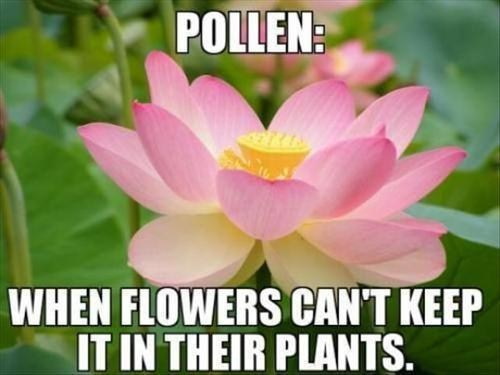 puns flowers funny - 7498044416