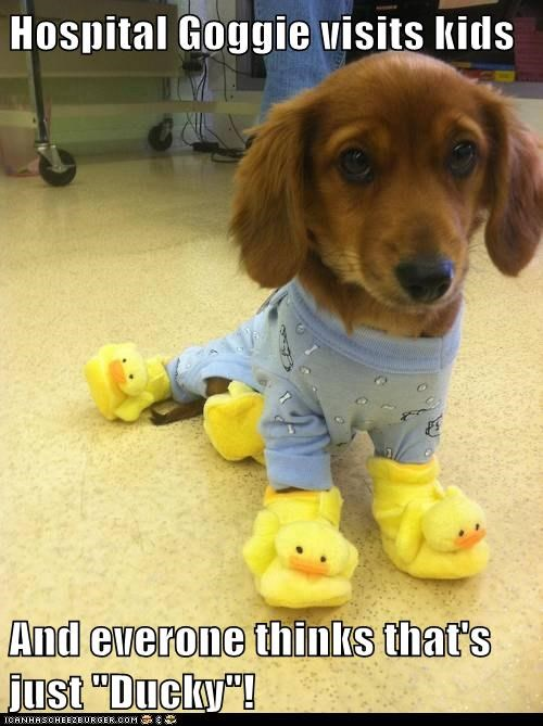 "Hospital Goggie visits kids And everone thinks that's just ""Ducky""!"