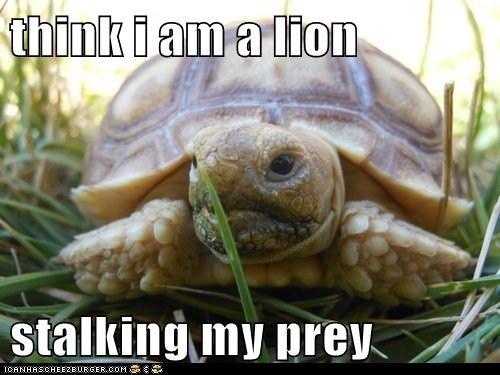 think i am a lion   stalking my prey